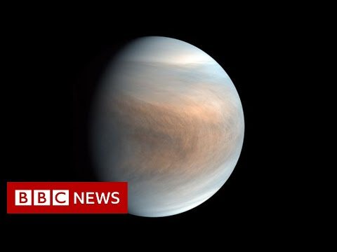 Is there life floating in the clouds of Venus? - BBC News