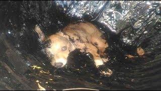 3 Rescates de Perritos EXTREMO. Auténticos héroes, atrapados en alquitrán