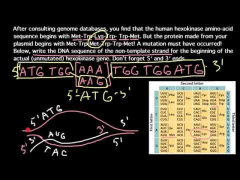 how-to-solve-dna-mutations-problems