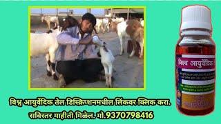 Golden Goat Farm - अरगडे शेळीपालन इंदापूर  M.S.Patil-sheli Palan Helpline - 9730607617