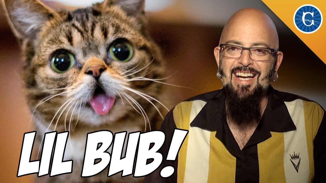 Internet famous cat lil bub chats with jackson galaxy for Jackson galaxy band