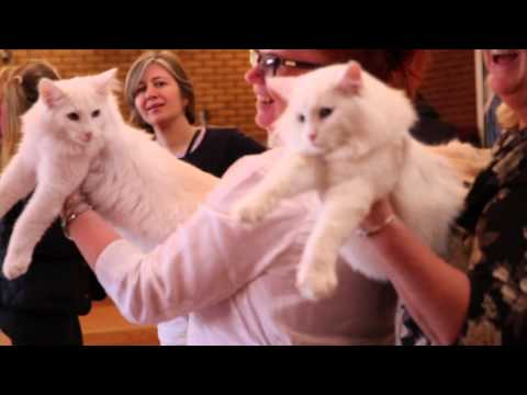 norwegian-forest-cat-championship-2015