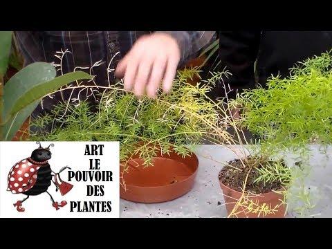 Conseils jardinage comment faire l 39 entretien et l 39 arro for Conseil jardinage