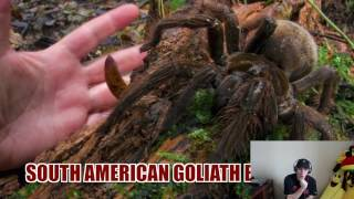 The Biggest Spider in The World!!