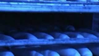 VIDEO SITEP FERRARA Varie pezzature anche su telai