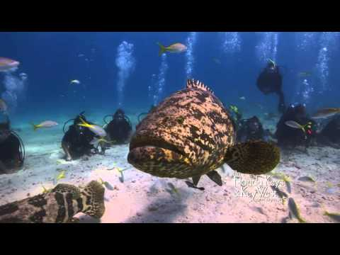 City Of Washington Shipwreck, Florida Keys