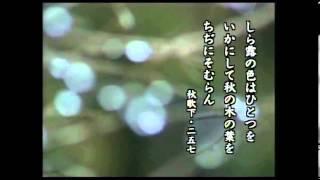 DVD「古典資料DVD 古典入門(7) 「古今和歌集」~日本の美意識の原点」