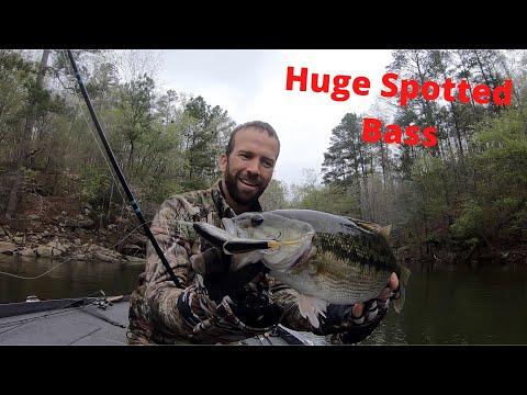 Catching HUGE Spotted Bass On Secret Swimbait Lewis Smith Lake!!! Lucas Black Bass Fishing