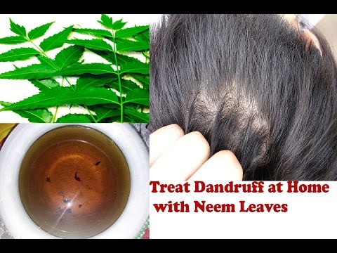 How use Neem Leaves for Dandruff very easily at home? Stop Itching And  Dandruff With Neem Leaves