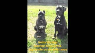 """Dog Training """"wait"""" Near Hinesville, Ga."""