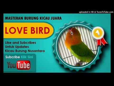 Kumpulan Masteran Mp3 Suara Kicau Burung Lovebird Ngekek juara