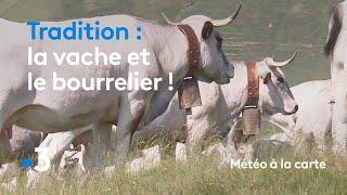 La vache et le bourrelier ! - Météo à la carte