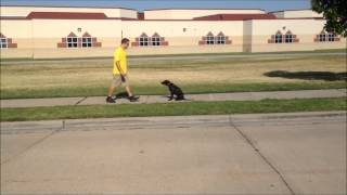 Axle - Dog Training - Obedience Schools Tulsa