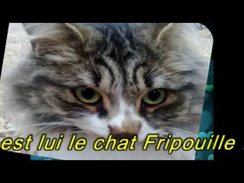 KME.38. -Le Mambo-Ska du Chat-Chat-Chat...(Fripouille).