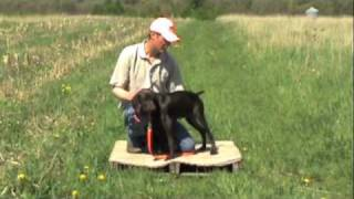 Dog Training - Vibrate condition to a place board