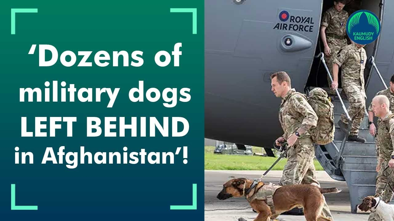Dozens Of Service Dogs Were Left Behind In Afghanistan