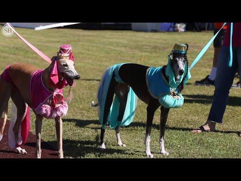 Humane Society of South Mississippi Barktoberfest Halloween costume contest