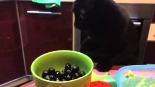 Кот, маслины, всё и сразу =)