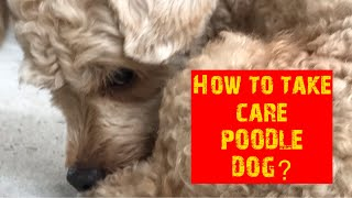What is POODLE DOG?