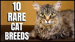 10 Rare Cat Breeds