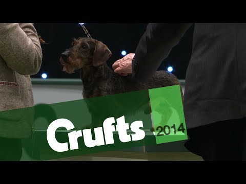 Group Judging | Hound | Crufts 2014