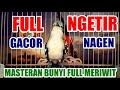 Pancing Bunyi Cipoh Sirtu Full Ngetir Meriwit Gacor  Mp3 - Mp4 Download