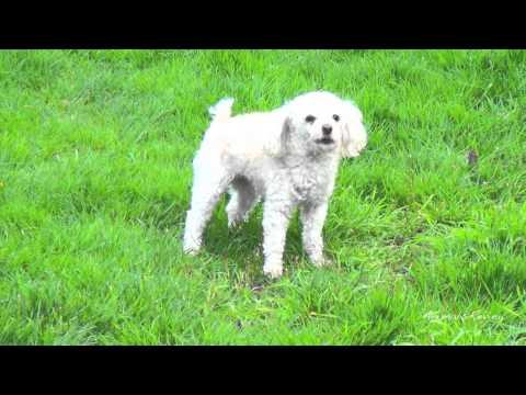 Dog barking mutation - 5 sounds