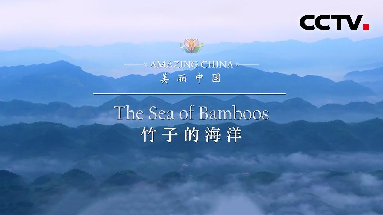 《美丽中国》竹子的海洋 Amazing China-The Sea of Bamboos | CCTV纪录