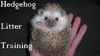Hedgehogs - Litter Training