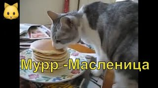 Кот.  Масленица.  Блина да сметана -  пища наша.  Интересная подборка видео