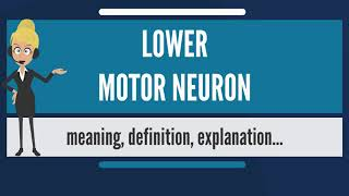 What is LOWER MOTOR NEURON? What does LOWER MOTOR NEURON mean? LOWER MOTOR NEURON meaning