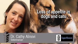 Loss of appetite in dogs and cats