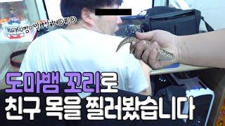 도마뱀 꼬리로 친구 (뒷)목을 찔러보았습니다. [호주에…