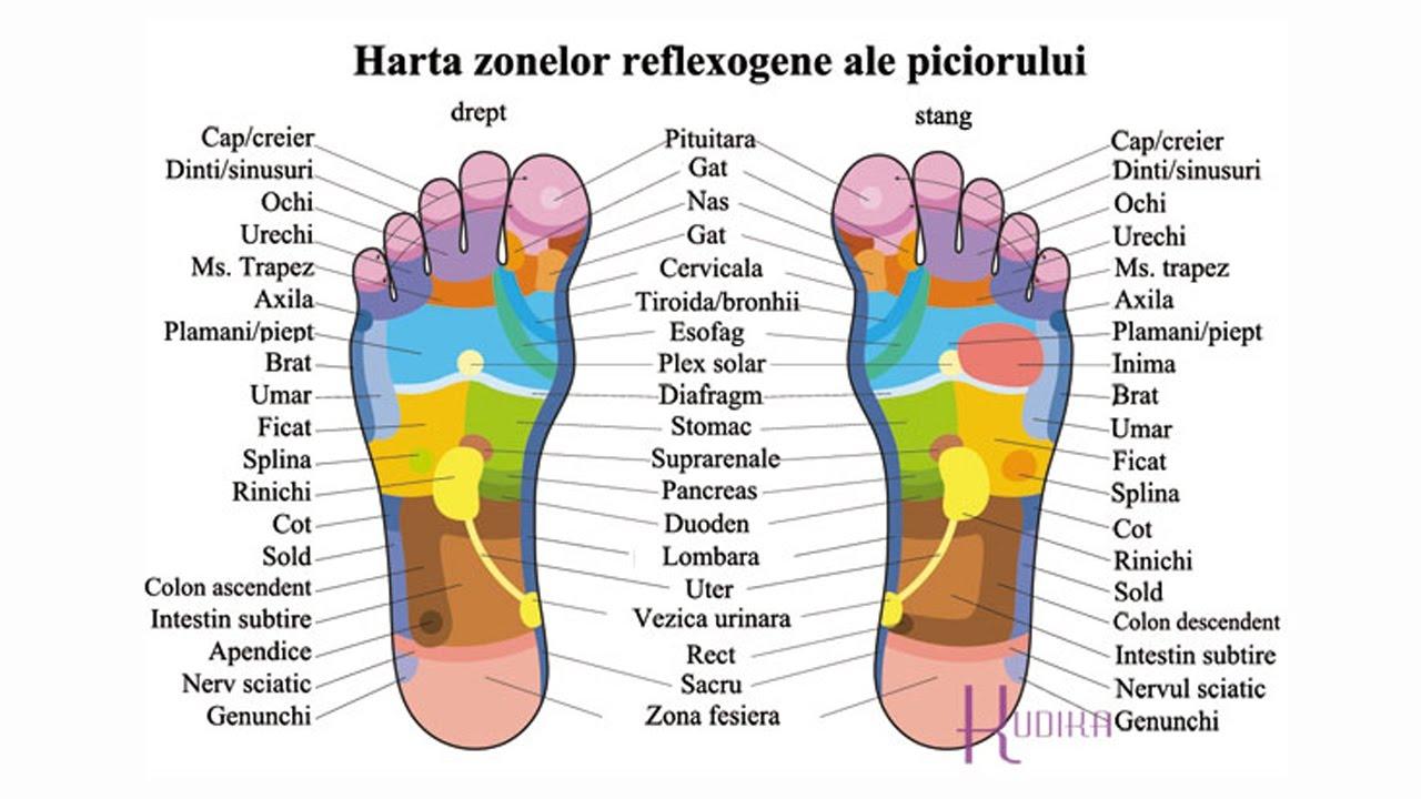 dureri articulatii: umeri, coate, genunchi, gelzna+ dureri musculare | Forumul Medical ROmedic