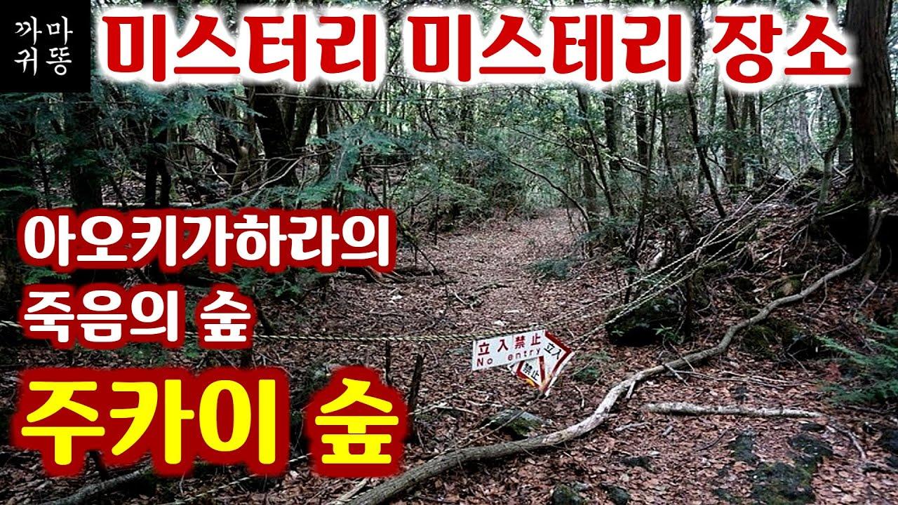 주카이숲 - 일본 아오키가하라 죽음의숲 - 미스터리 미스테리 장소