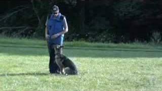German Shepherd Training - Reno Obedience Graduate