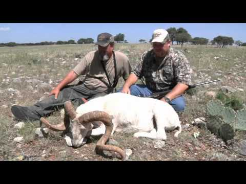 Texas Hill Country Exotics - The High Road