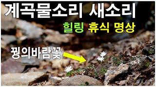 계곡물소리 - 자연의소리 백색소음 (꿩의바람꽃)
