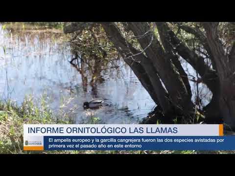 Estudio ornitológico Parque de Las Llamas 2017