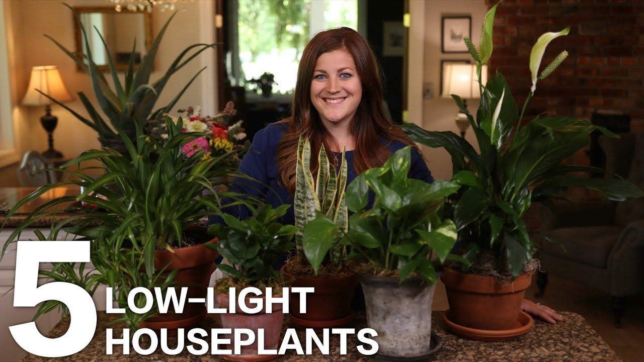 5-low-light-houseplants-garden-answer