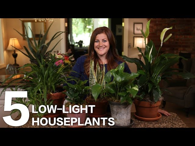 5 Low-Light Houseplants  // Garden Answer