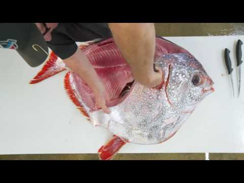 Watch fish monger Tommy Gomes of Catalina Offshore Products break down an Opah