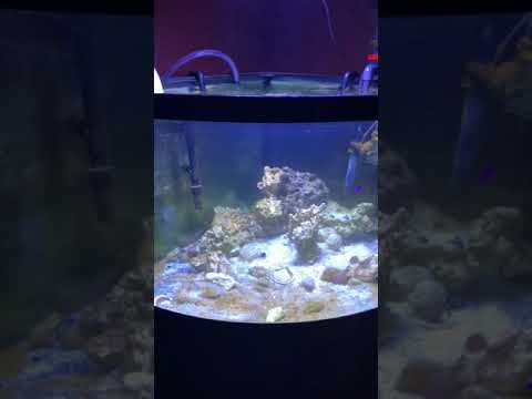 How to connect 2 saltwater aquariums by circulating from 1 tank to another!
