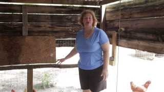 Homesteading Ideas. Is Your Chicken Roost The Proper Height?