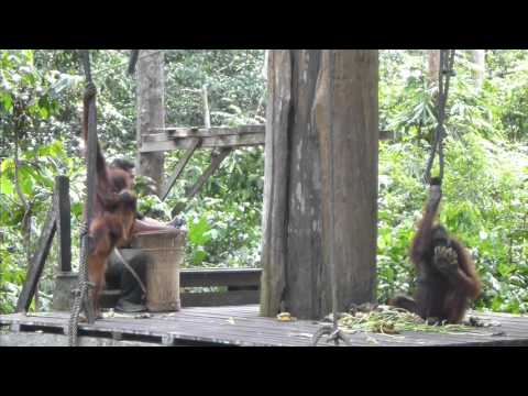 Borneo Video Compilation 2015
