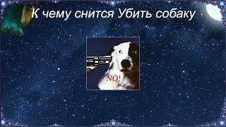 К чему снится Убить собаку (Сонник)