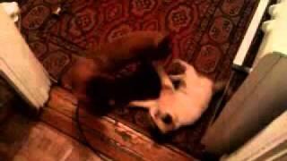 Собака попой к коту