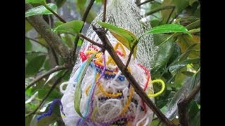 yarn clippings for birds - 320×180