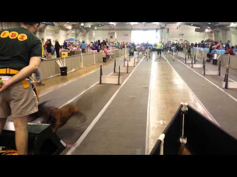 Flyball nut York PA 2015