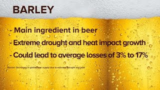 Climate change may cause dramatic beer shortages